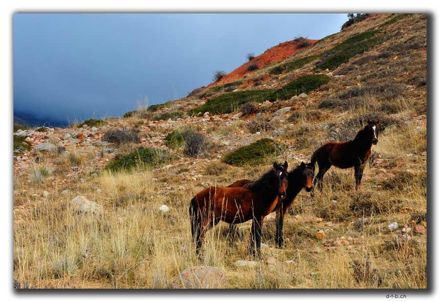 Cholpon Ata horses