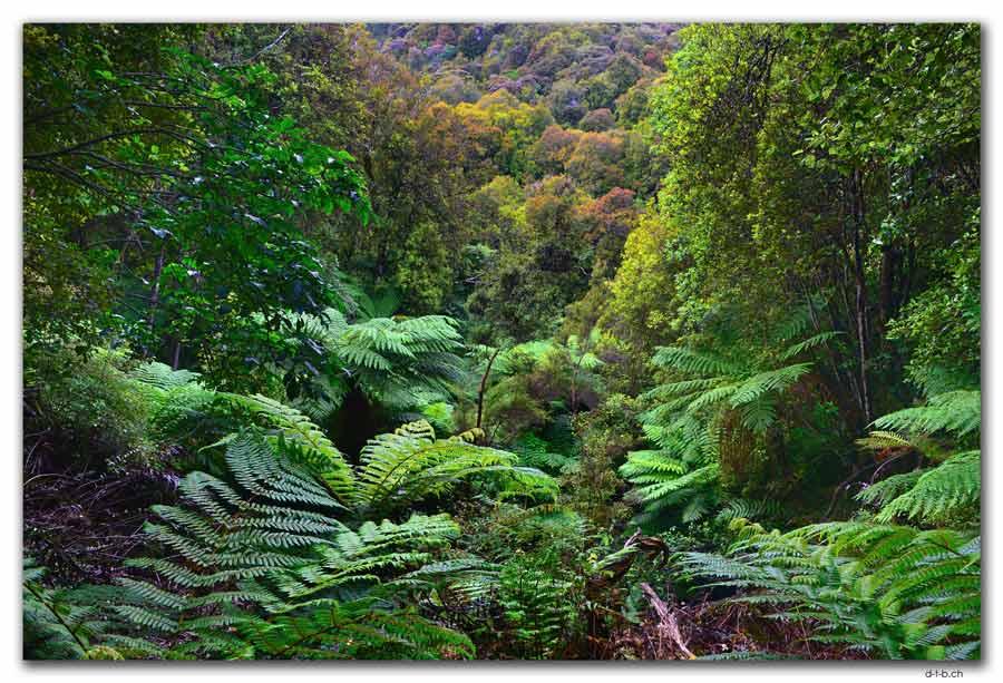 Stewart Island.Rakiura Track.View