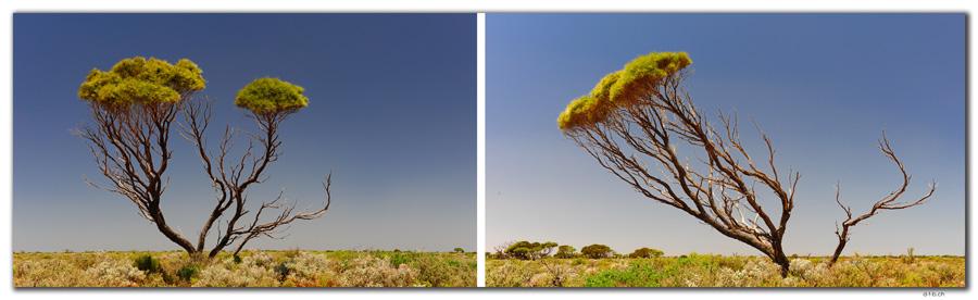 AU0919.Roe Plain.Baum.