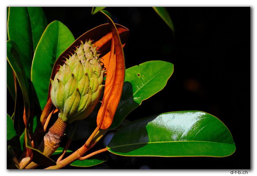 Chch.Tree flower