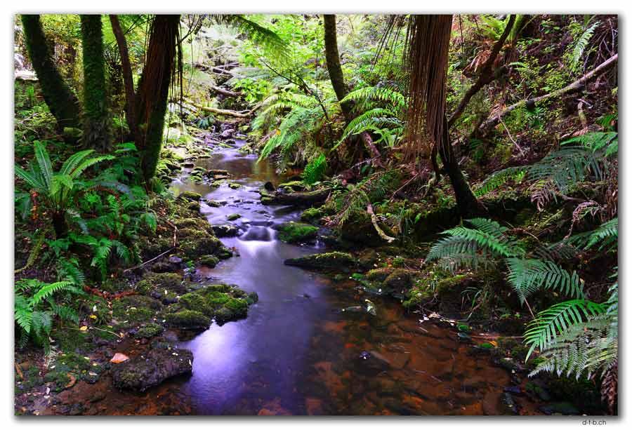 Stewart Island, Oban, Fern Gully
