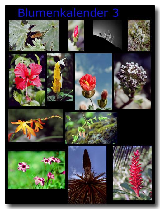 Blumen 3 / Flowers 3