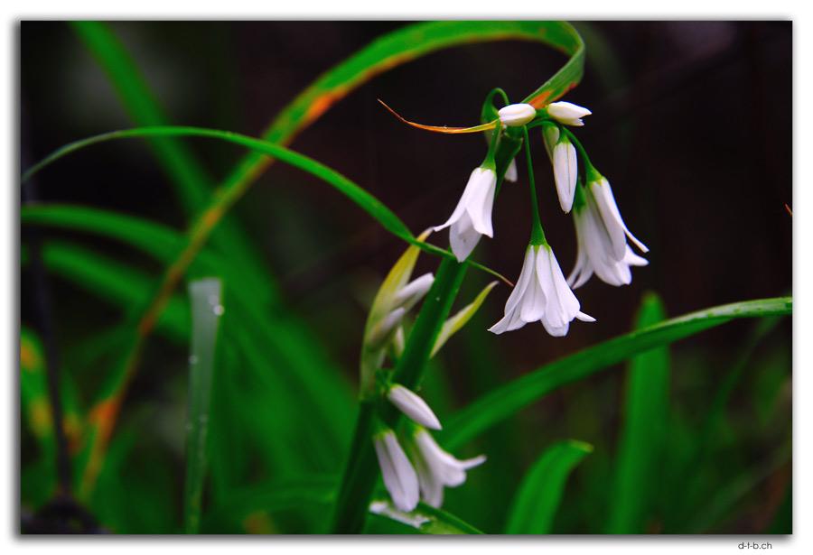 Blume bei Mt.Eden