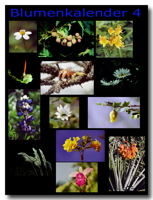 Blumen 4 / Flowers 4