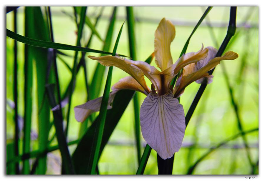 Bunnythorpe.Orchid