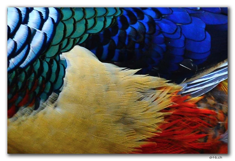 Willowbank Wildlife Park. Golden Pheasant