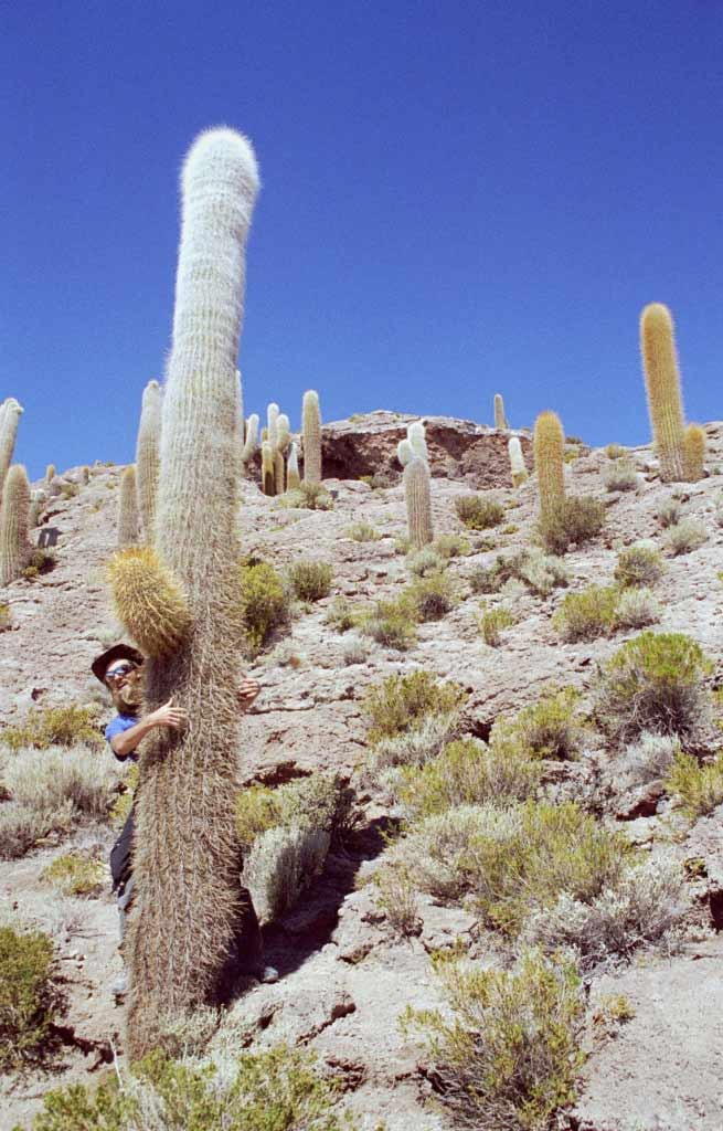Bolivien, Salar de Uyuni, Isla Incahuasi
