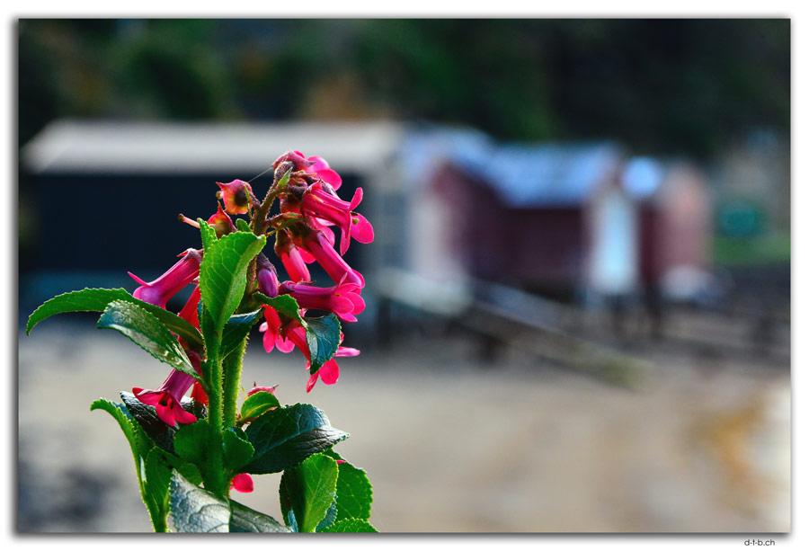 Stewart Island, Oban, Boat sheds