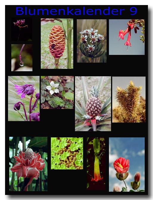 Blumen 9 / Flowers 9