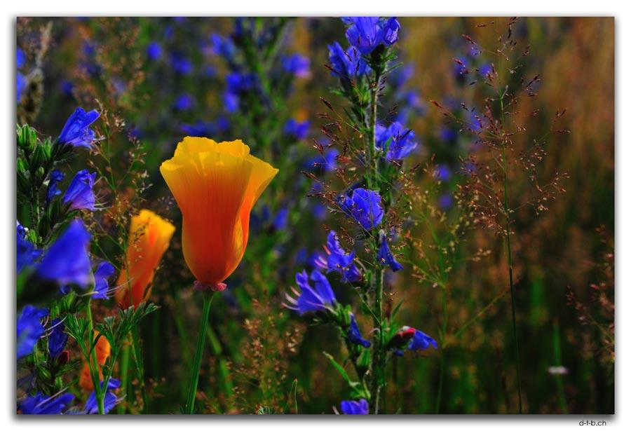 Tapawera. Flowers