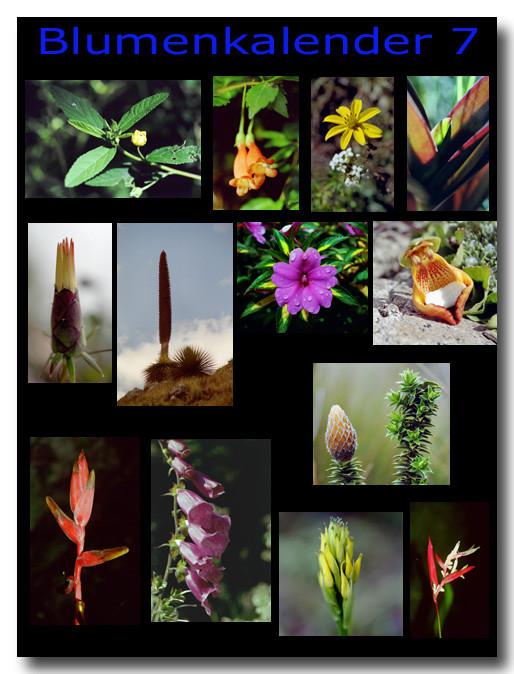 Blumen 7 / Flowers 7
