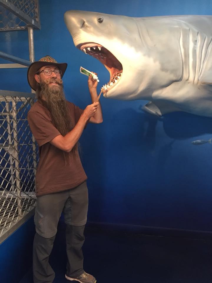 Dem Hai die Zähne putzen