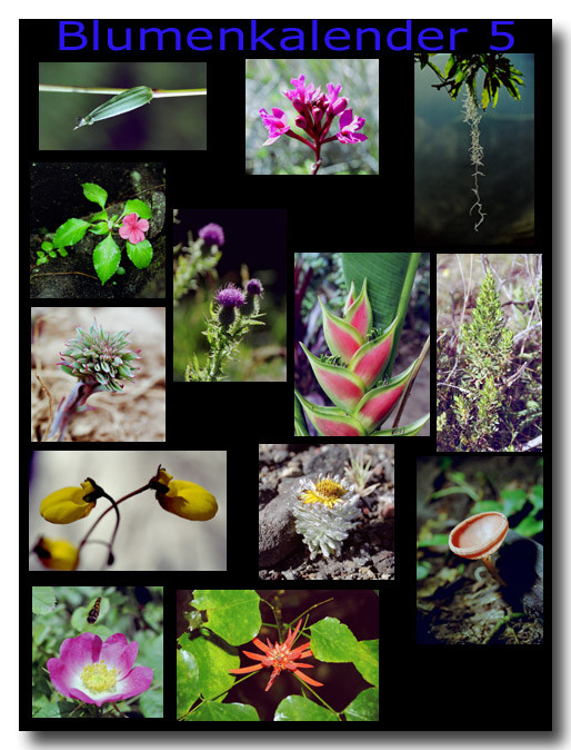 Blumen 5 / Flowers 5