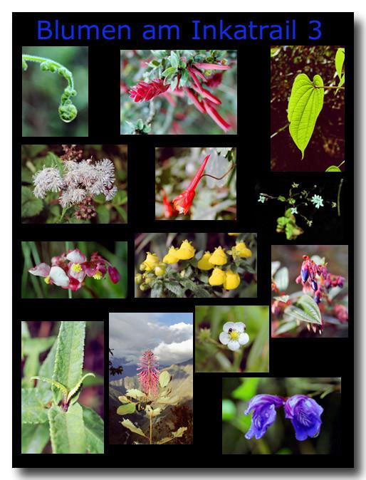 Blumen am Inkatrail 3 / Flowers on the Inka trail 3