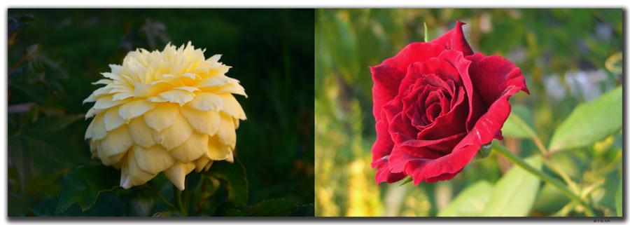 IR0022.Abbas Abad.Blumen