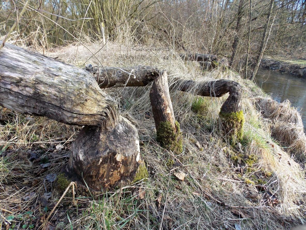 Bäume gefällt - GF-Winkel