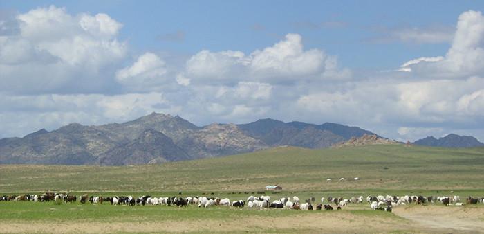 Schaf- und Ziegenherde in der Mongolei, aufgenommen von ritsch-ratsch