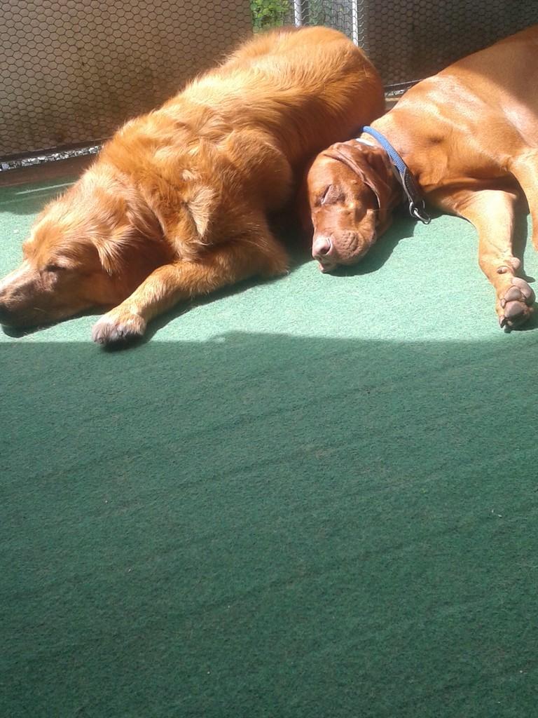 Wir zwei Sonnenanbeter