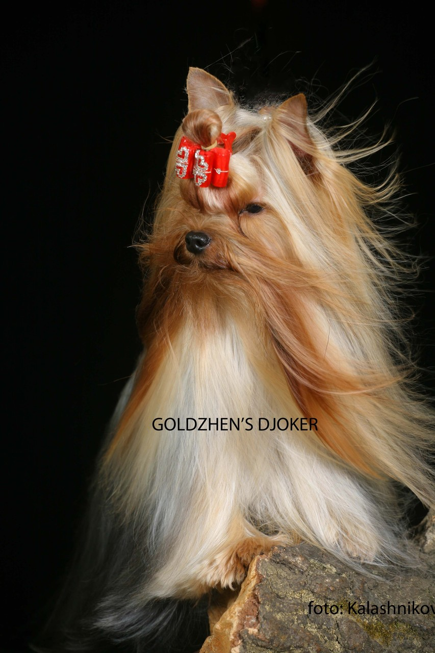 GOLDZHEN'S DJOKER