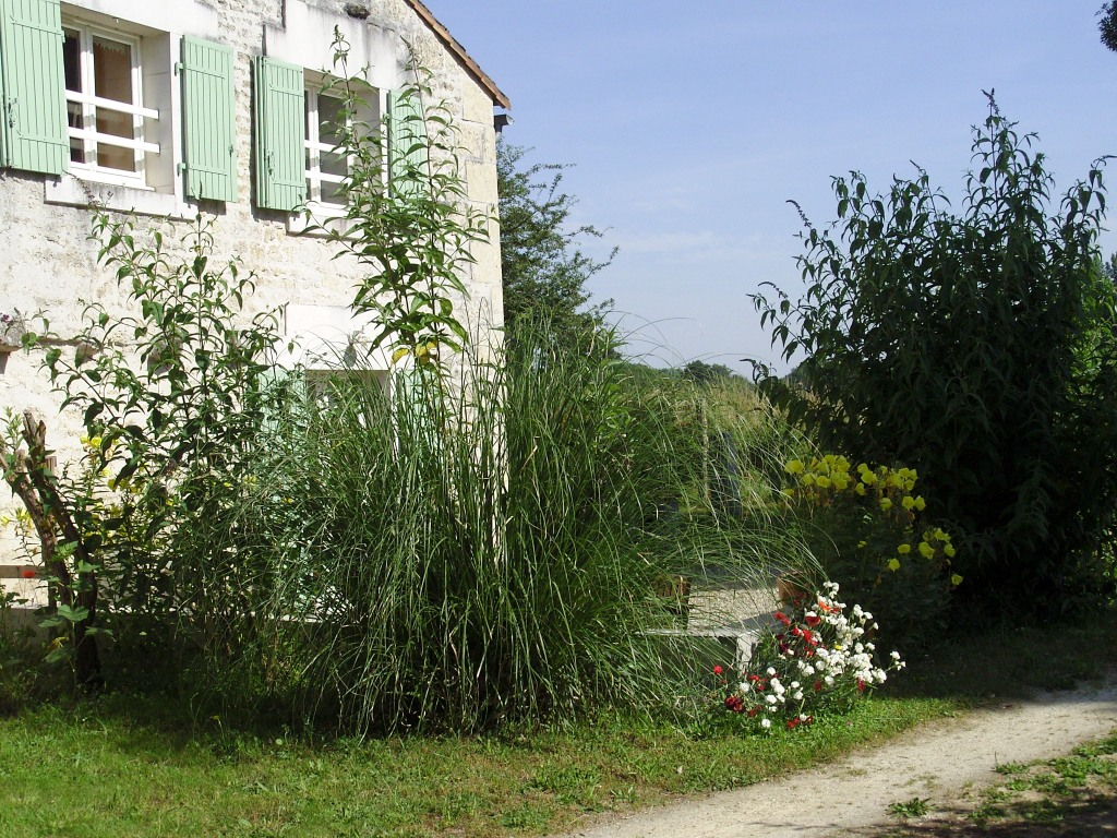 Gîte côté grenouilles Sainte Megrine entouré de nature