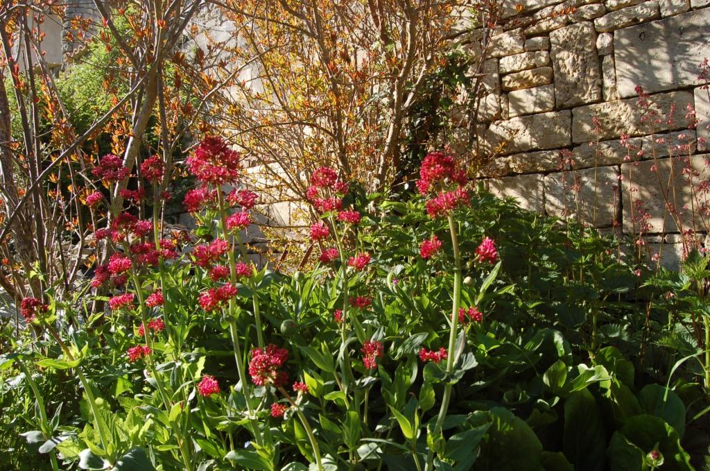 Maison d'hôtes Sainte Megrine Coulon des fleurs et des senteurs