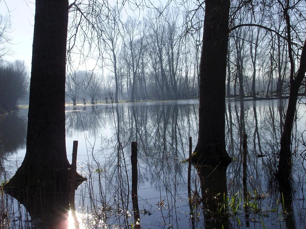 Le marais inondé certains hiver