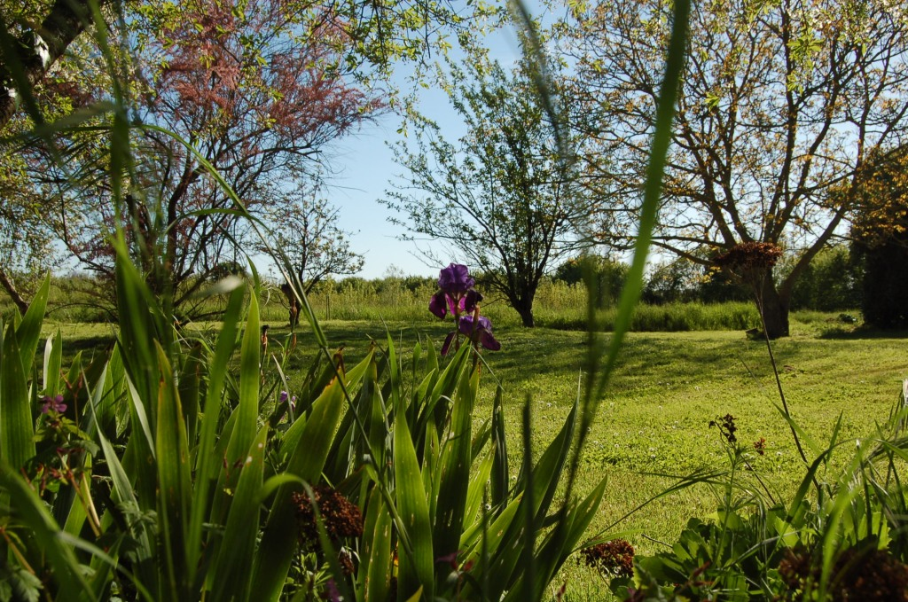 Vue imprenable jardin sainte megrine