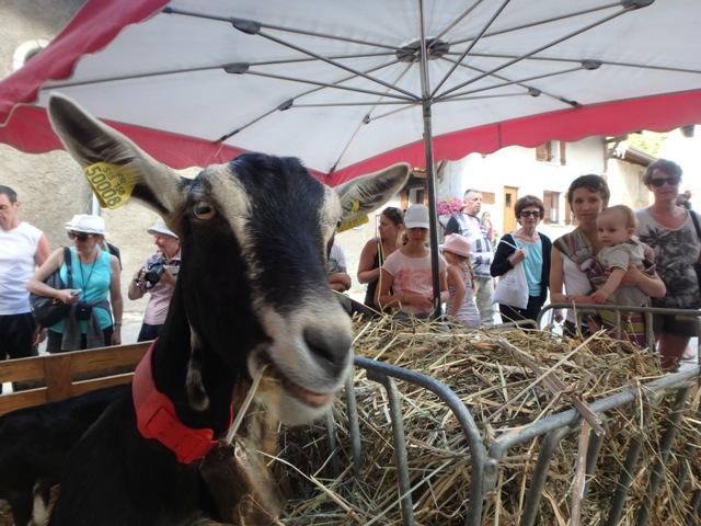 chèvre de Savoie