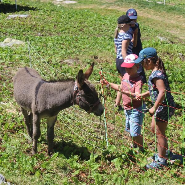 connaissance avec notre âne Gégé