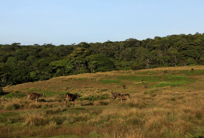 "Wanderung zum ""World´s End"", Horton Plains Nationalpark"