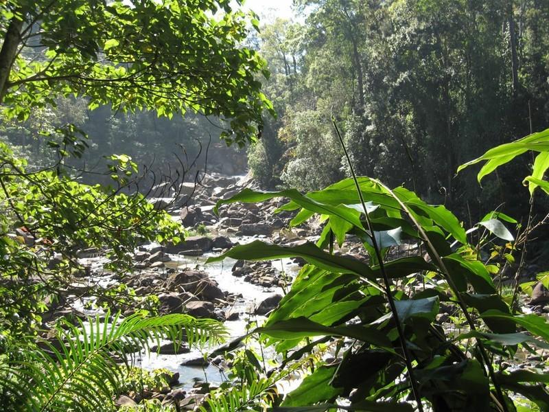 Dschungel-Safari durch den Sinharaja Regenwald