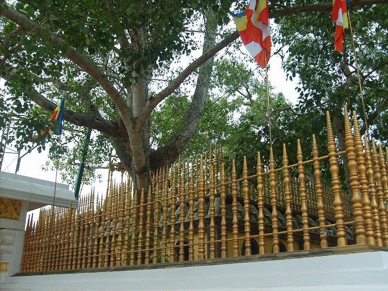 Sri Mahabodhi Baum