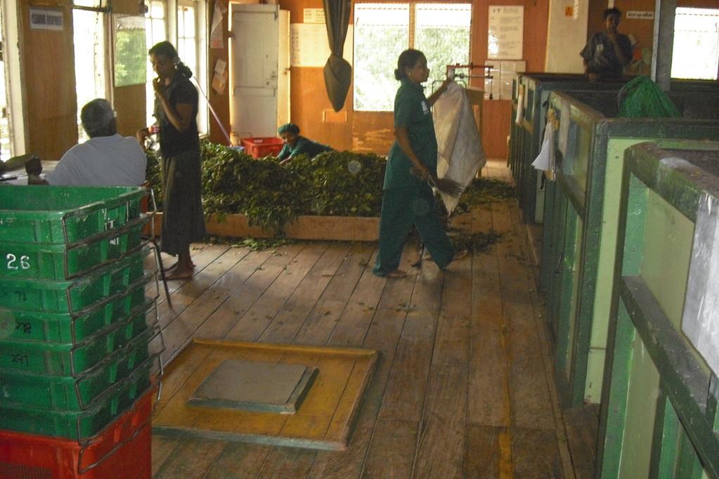 Führung durch die Teefabrik