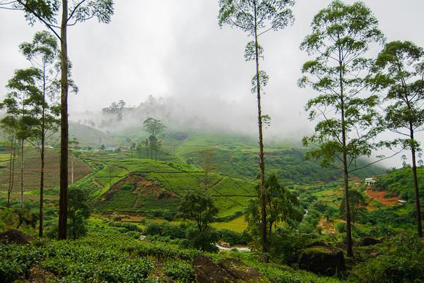 Teeplantagen im Hochland