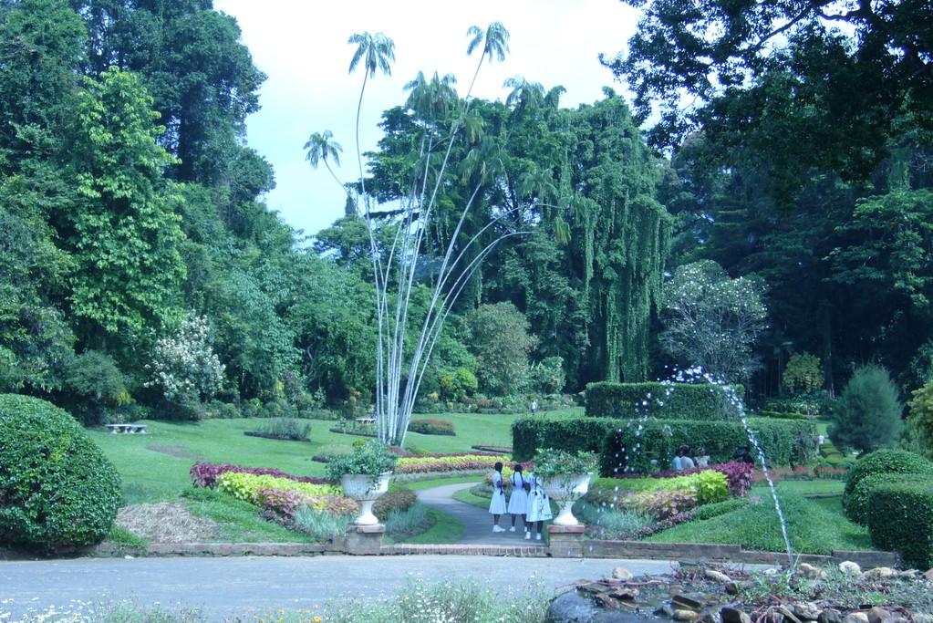 Botanischer Garten, Peradeniya