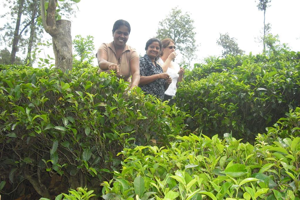 Führung über die Teeplantagen