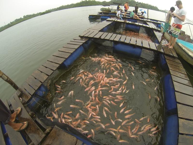 Besuch einer Fischfarm auf dem Koggala River