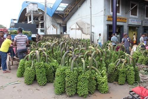 Rundgang über den Dambulla Vegetable Market