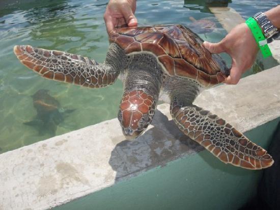 Schildkrötenfarm, Kosgoda