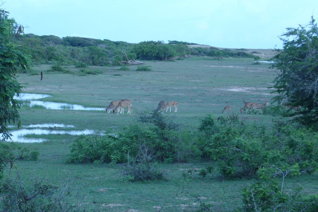 Jeep-Safari im Yala Nationalpark