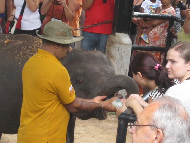 Fütterung der kleinen Elefanten