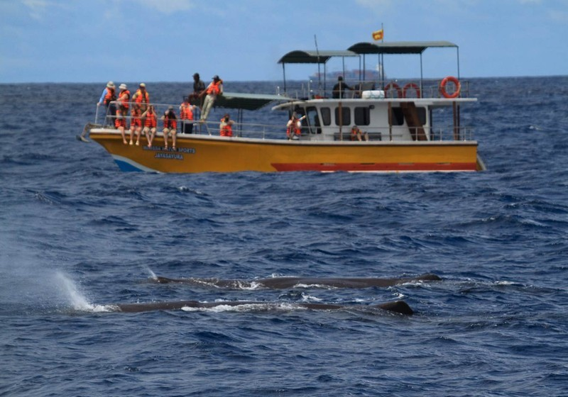 Whale & Dolphin Watching, Mirissa