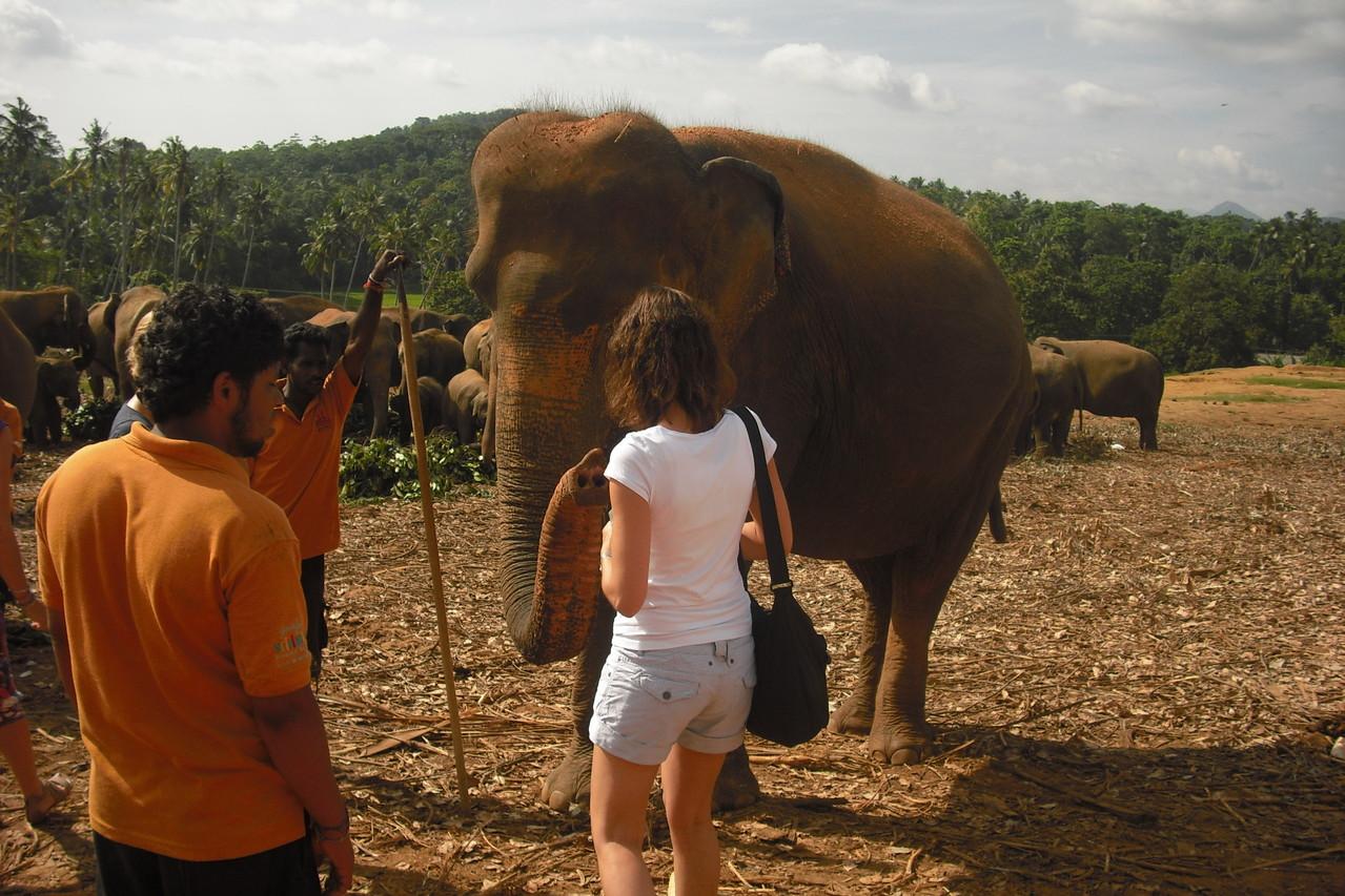 Füttern der Elefanten, Pinnawela