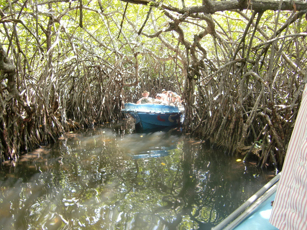 Boot-Safari auf dem Madu River