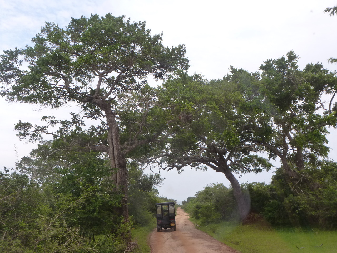Jeep-Safari im Yala Nationalpark