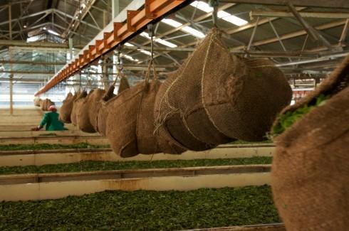 Teefabrik, Nuwara Eliya