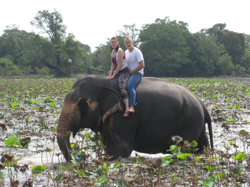 Elefantenreiten, Habarana