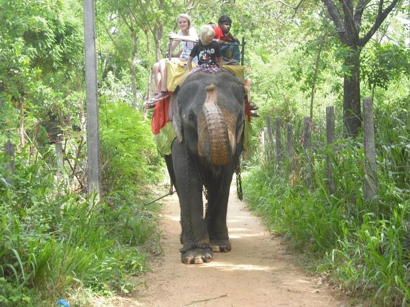 Habarana-Elefantenreiten
