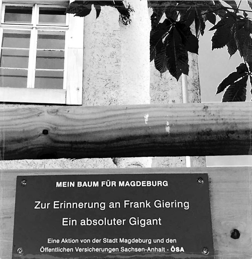 Ein Baum für Frank Giering: Lothar-Kreyssig-Straße, Magdeburg
