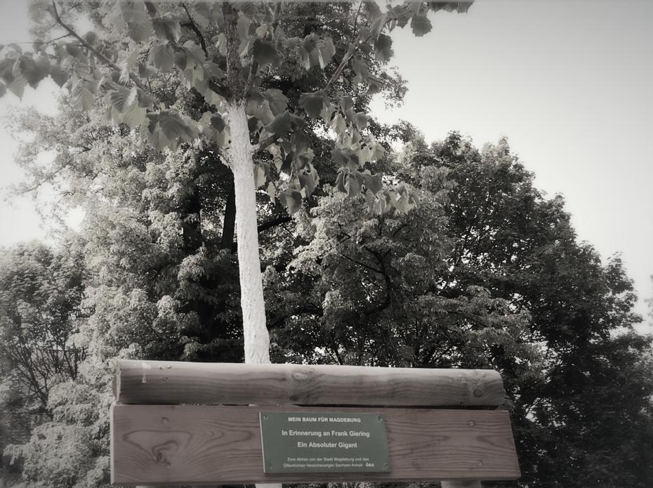 Ein Baum für Frank Giering: Schroteanlagen an der Goethestraße, Magdeburg